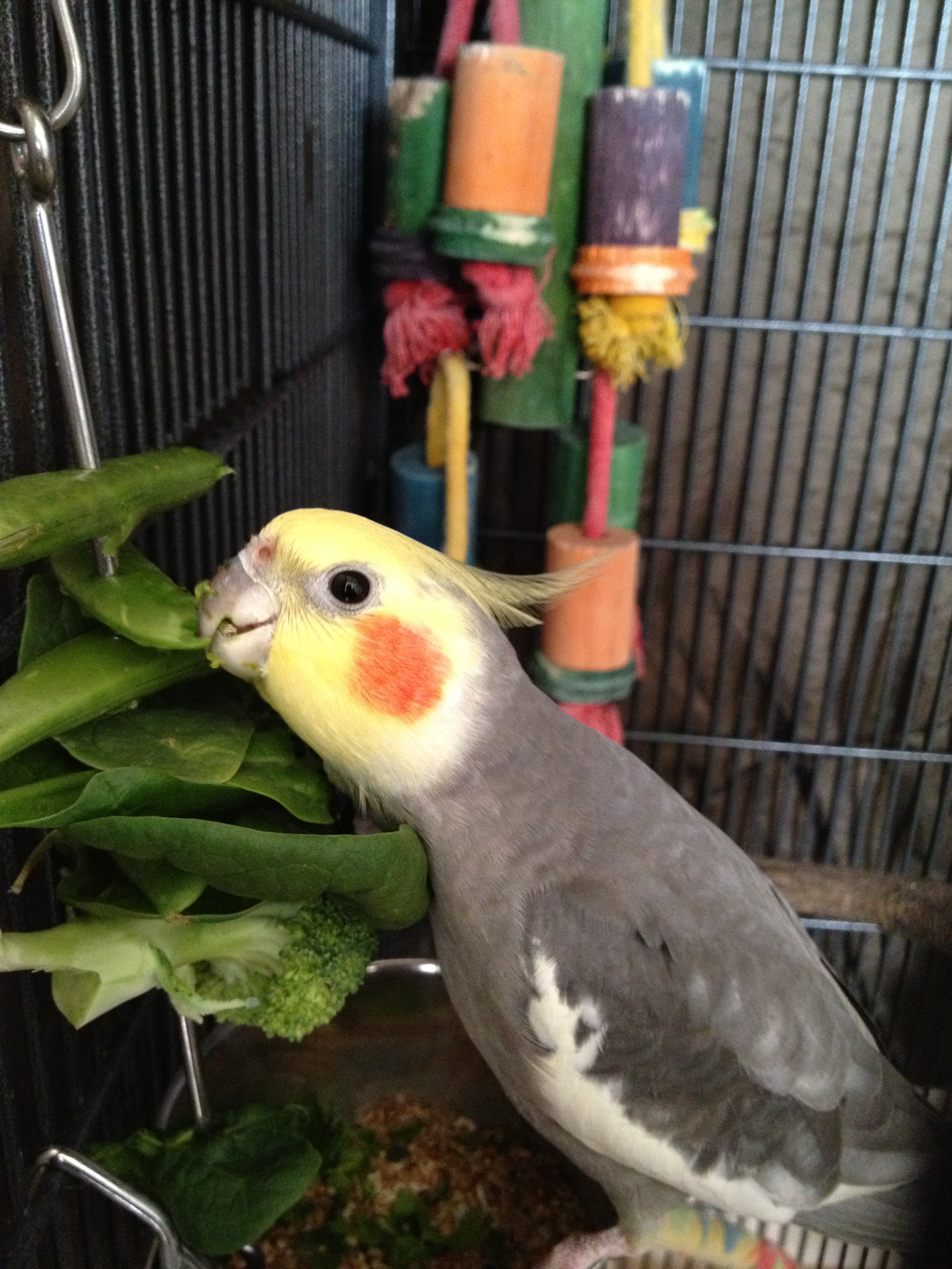 The Problem With Pet-Shop Birds  – Three Birds and a Cloud