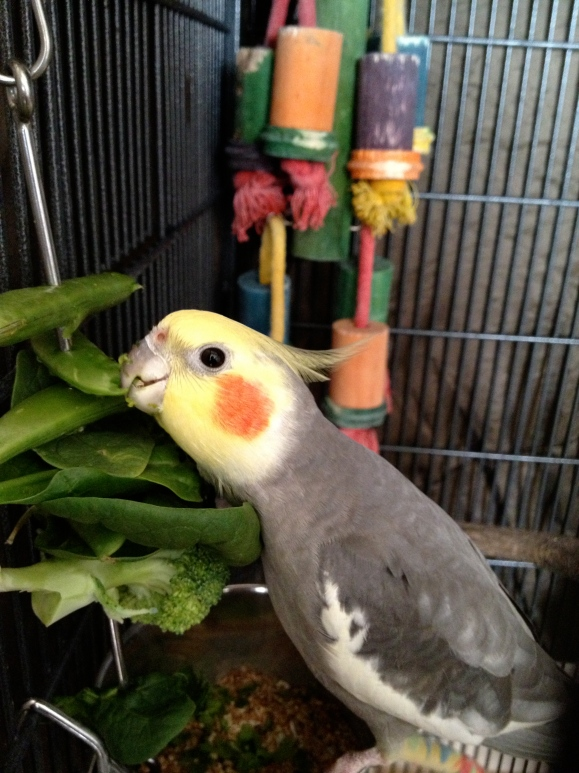 Pet Shops Near Me That Sell Birds - Pet's Gallery