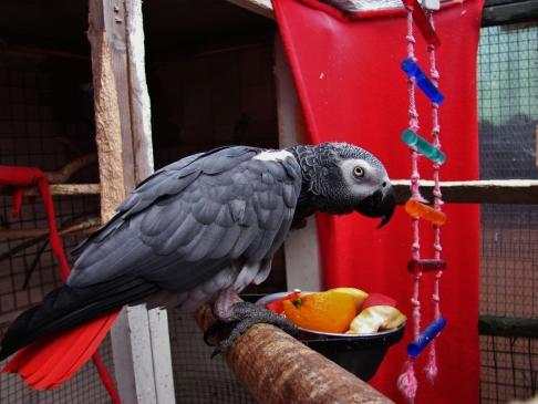 Island Parrot Sanctuary 023