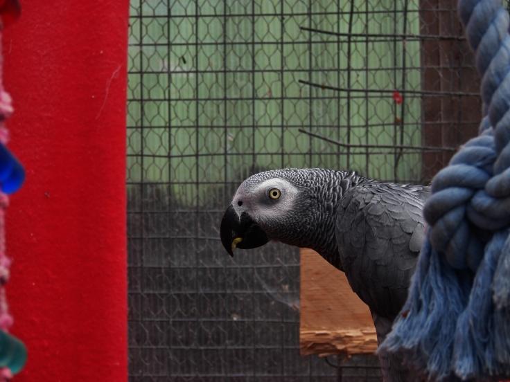 Island Parrot Sanctuary 026