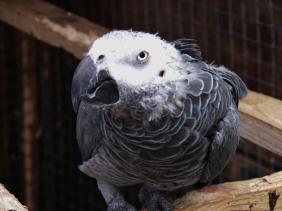 Island Parrot Sanctuary 034