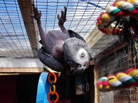 Island Parrot Sanctuary 043