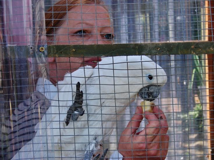 Island Parrot Sanctuary 053