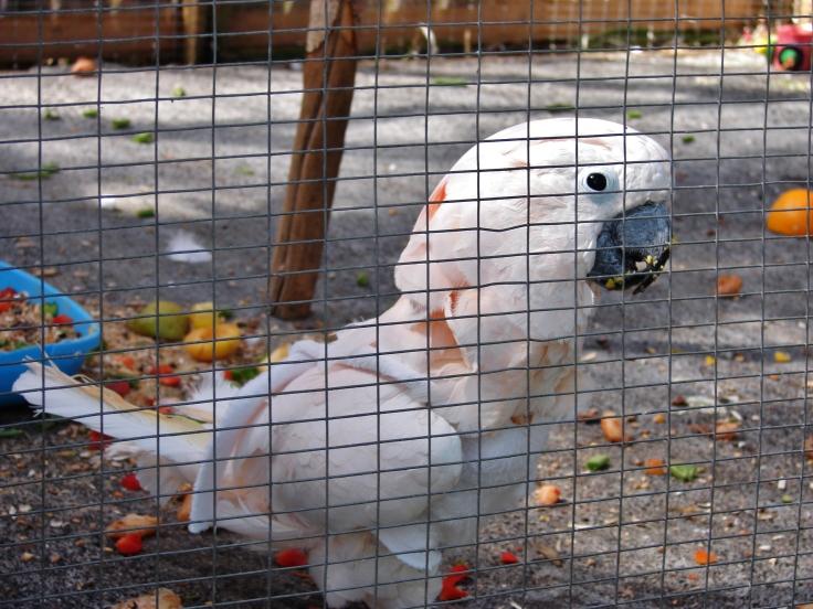 Island Parrot Sanctuary 054