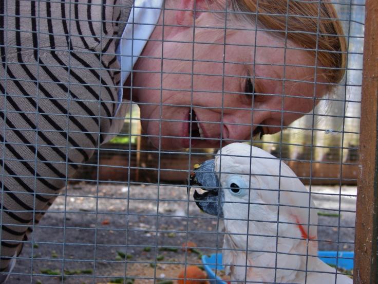 Island Parrot Sanctuary 058