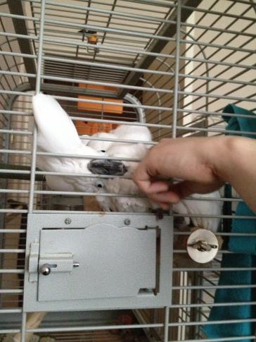 Island Parrot Sanctuary 060