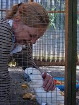 Island Parrot Sanctuary 062