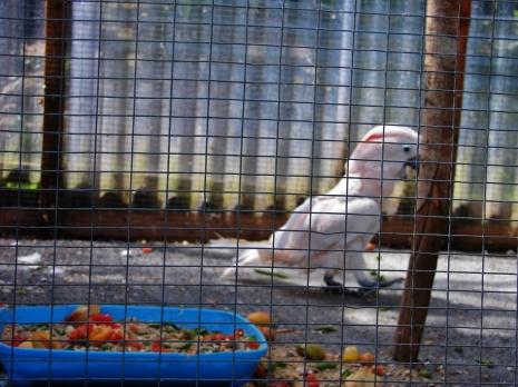 Island Parrot Sanctuary 070