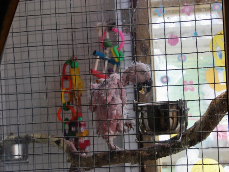 Island Parrot Sanctuary 081
