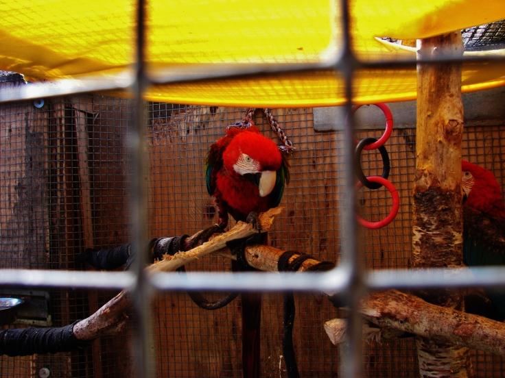 Island Parrot Sanctuary 083