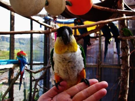 Island Parrot Sanctuary 091