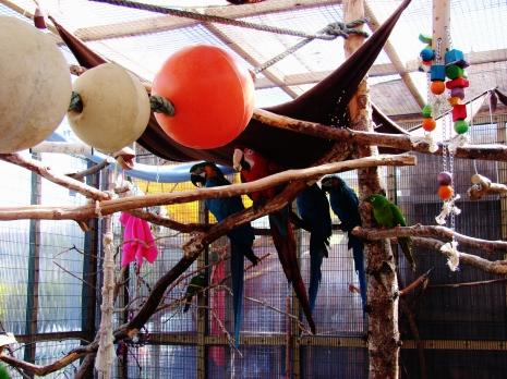 Island Parrot Sanctuary 093