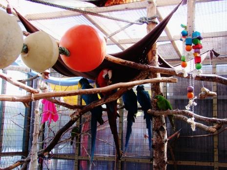 Island Parrot Sanctuary 095