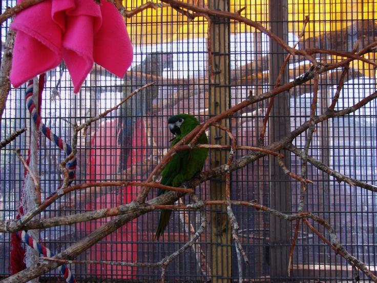Island Parrot Sanctuary 100