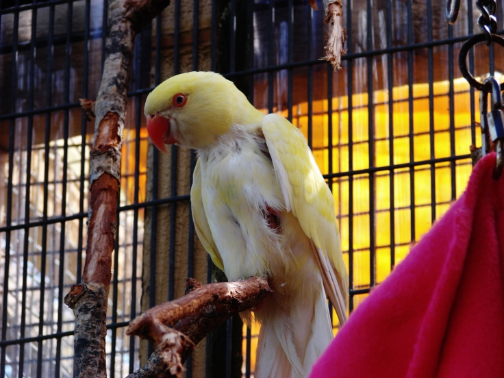 Island Parrot Sanctuary 101