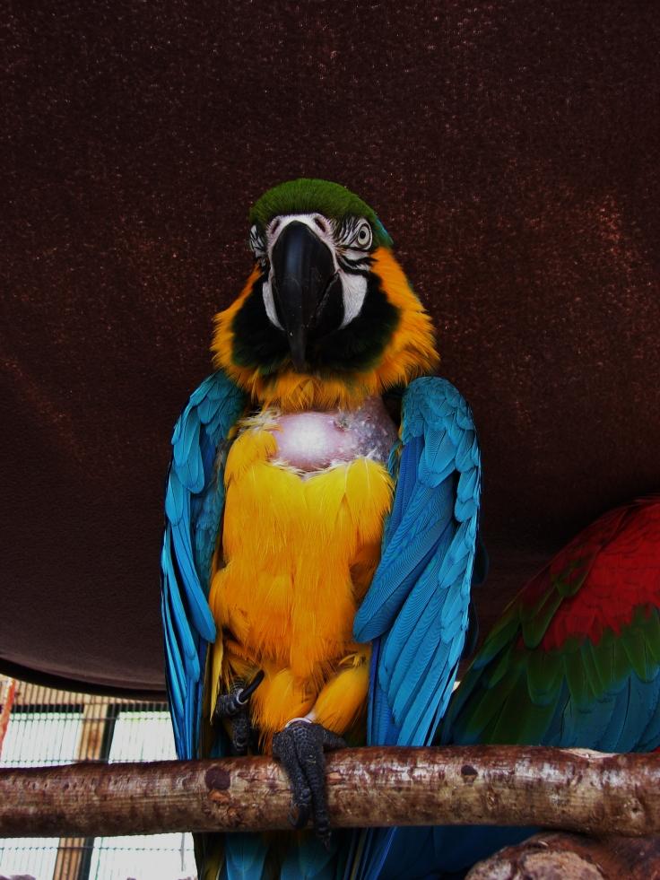 Island Parrot Sanctuary 102
