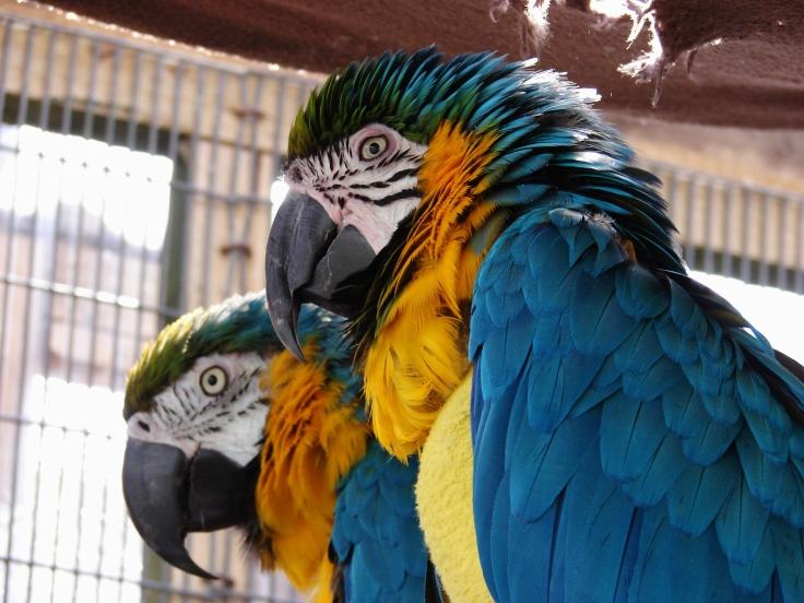 Island Parrot Sanctuary 106
