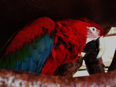 Island Parrot Sanctuary 108