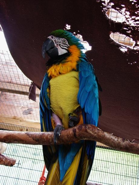 Island Parrot Sanctuary 112