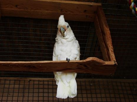 Island Parrot Sanctuary 113