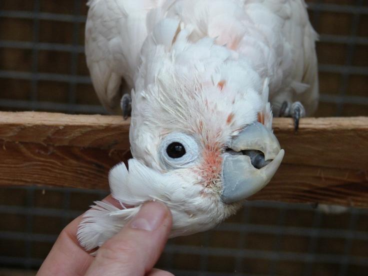 Island Parrot Sanctuary 115