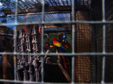 Island Parrot Sanctuary 122