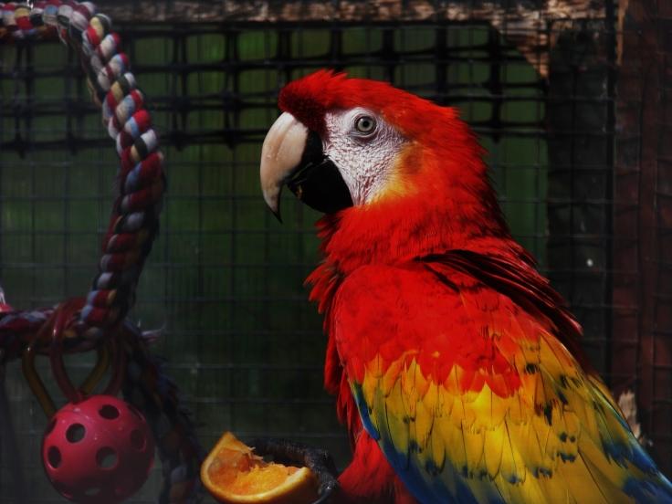 Island Parrot Sanctuary 123