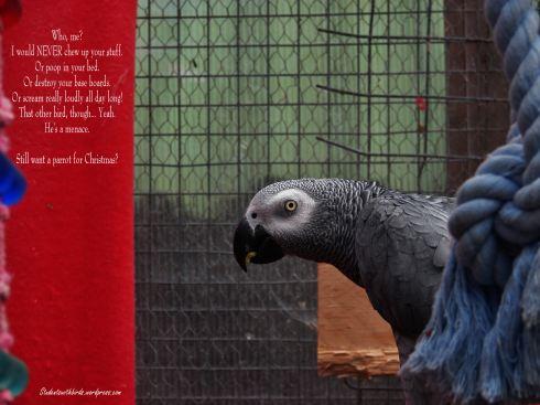 island-parrot-sanctuary-026 (1)