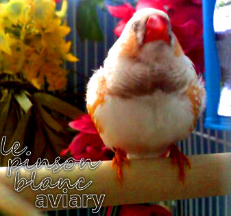 aviary_photo13
